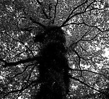 The Tree by Ryan Davison Crisp