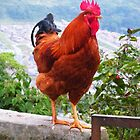 Gallo (Rooster) by fortemute