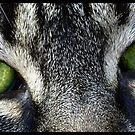 Green Eyes by Britta Döll