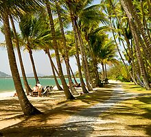 PalmCove - Coconut Trees at Midday 6 by Geoffrey Thomas