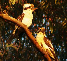 KOOKABURRAS AT SUNSET by Helen Akerstrom Photography