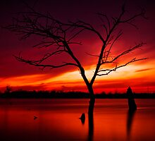 The Lonely Tree by Brandon Hayes