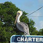 Pelican in the Florida Keys by aura2000