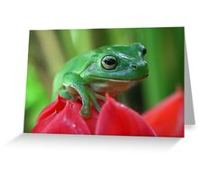 Green tree frog on red ginger flower Greeting Card