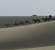 By horse overland - Stockton Beach NSW by kelliejane