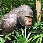 Jungle Gorilla by ScenerybyDesign