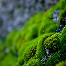 Mossy Micro Scape by Pinhead Industries