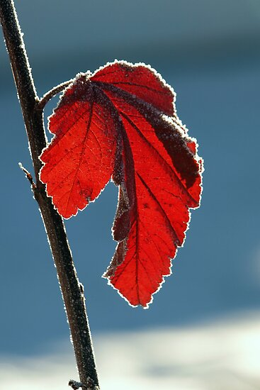 Winter Leaf by Stan Wojtaszek
