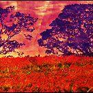 Poppy Hill  by Kelvin Hughes