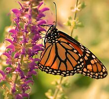 Mystic Morning - Monarch and Purple Majesty by DianeBUhlman