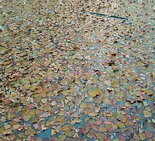 AUTUMN LEAVES OVER WATER  by robertpatrick