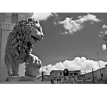 Mighty Lion Che Photographic Print