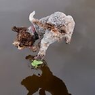 Flying Lagotto by Mark  Allen