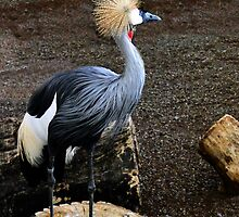 Crowned Crane by Al Bourassa