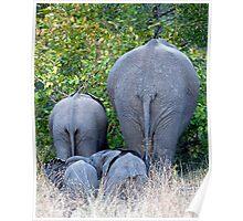 Elephant Roadblock Poster