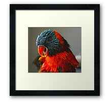 Olivia - Having A Chat To Me Framed Print