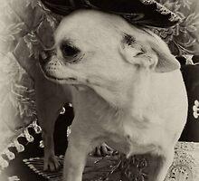 Ay, Chihuahua! by Heather Haderly