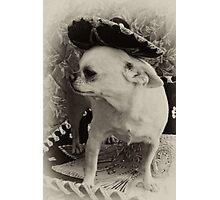 Ay, Chihuahua! Photographic Print