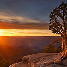 South Rim Sunlight by Robin Whalley