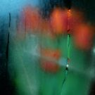 Red tulips through a frosted window, NYC by RonnieGinnever