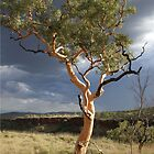 lone tree karajini national park by dmaxwell