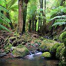 tarra bugla national park gippsland,1 by dmaxwell
