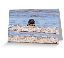 What do you want.!!!!!!! Greeting Card
