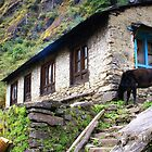 Life In The Himalayas by Betsy  Seeton