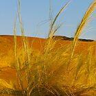 desert breeze by mamba