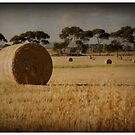 Hay Field -  Beveridge by Pam McLure