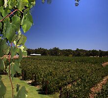 """Capel Vale Winery"" Margaret River, Western Australia by wildimagenation"