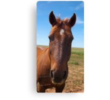 "I walked in to the bar and the barman asked, ""Why the long face?"" Canvas Print"
