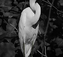 EGRET by jphall