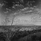 Chisos Sunrise...thanks for the clouds by Lacy O.