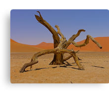 desert gladiators Canvas Print