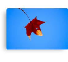 Maple Leaf in Fall Canvas Print