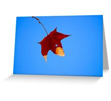 Maple Leaf in Fall Greeting Card