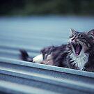 Yawn by Harley