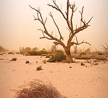 Dust storm at Lake Menindee by Paul Piko