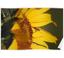Pollen For Feet Poster