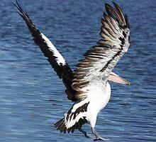 Taking Flight by byronbackyard