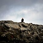 Lone bald eagle on the jetty by Jodi Morgan