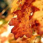 Fall's colors by Jodi Morgan