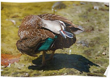 DUCK YOGA #1 by Scott  d'Almeida