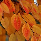 Autumn's colors by Jodi Morgan