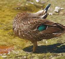 DUCK YOGA #2 by Scott  d'Almeida