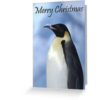 Emperor Penguin 3 - Merry Christmas Card Greeting Card