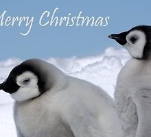 Emperor Penguins 6 - Merry Christmas Card by Steve Bulford