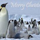 Emperor Penguins 7 - Merry Christmas Card by Steve Bulford