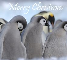 Emperor Penguins 8 - Merry Christmas Card by Steve Bulford